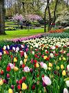 Netherland flower